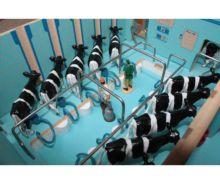 Sala de ordeño de vacas a escala 1:32 Brushwood Toys BT2000 - Ítem1