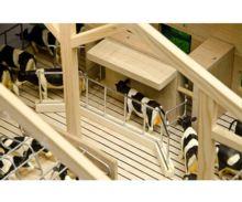 Granja abierta para vacas con cornadiza - Ítem1