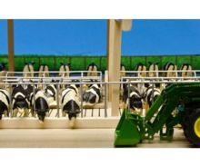 Granja abierta para vacas con cornadiza - Ítem2