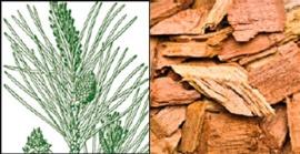 Pi (Pinus radiata)