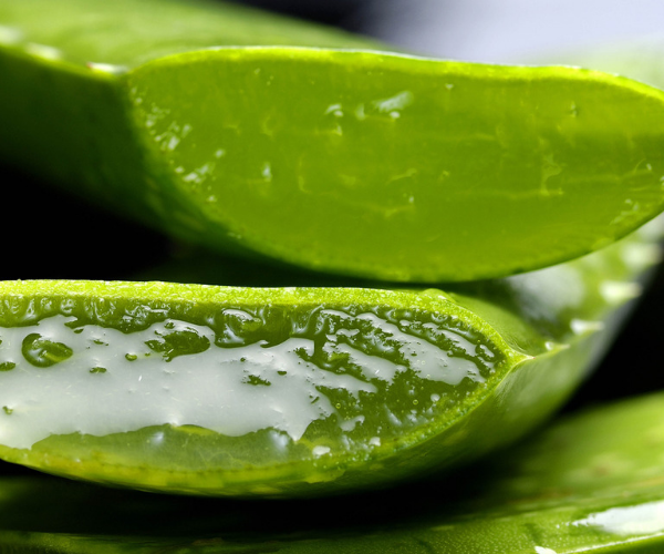 Cómo combatir el estreñimiento con plantas digestivas