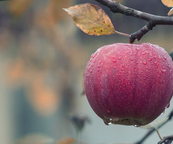 la manzana es rica en potasio