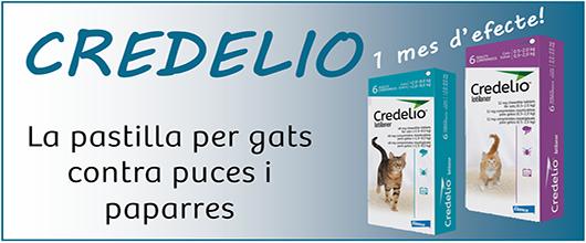 Credelio Gats - Antiparasitari en pastilles per gats, contra puces i paparres
