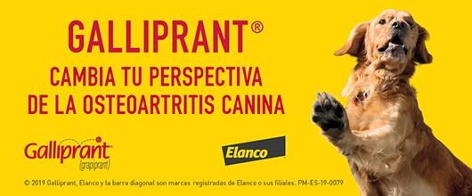 Galliprant, antiinflamatori per gossos amb artrosi