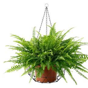 CESTA PLANTS METAL HF - Ítem2