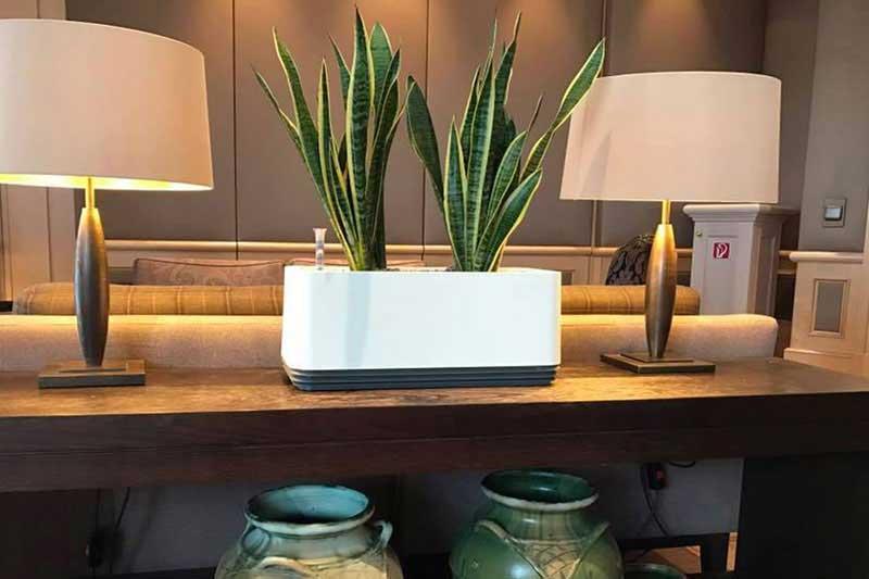 Macetas purificadoras de aire, un filtro natural