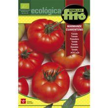Semillas ecológicas de Tomate Cuarenteno: El número de frutos por piso floral oscila entre 5 y 10, siendo de tamaño grande, color rojo claro, achatado y acodillado.