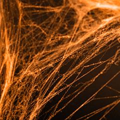 Tela de araña naranja. Decoración Halloween