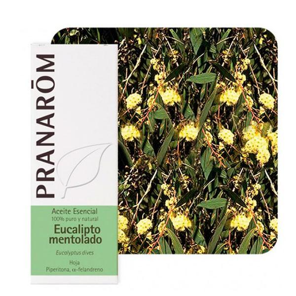 Pranarom Aceite Esencial Eucalipto Mentolado | Farmaconfianza | Farmacia Online