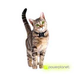 comprar câmera perros y gatos - Item2