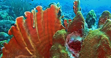 Aceite Esencial Higo Coral - Ítem1