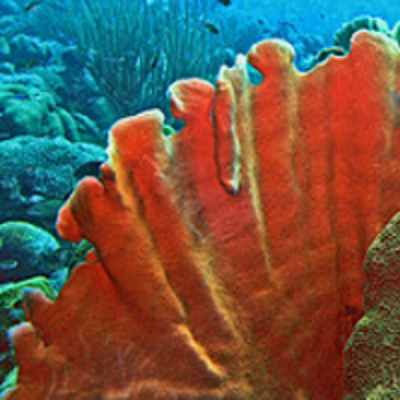 Essential Oil Coral