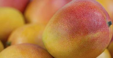 Aceite Esencial Mango - Ítem1