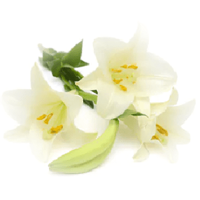 Home Fragrance Tuberose Sample 13ml