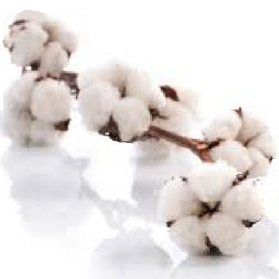 Ambientador Spray Pure Cotton