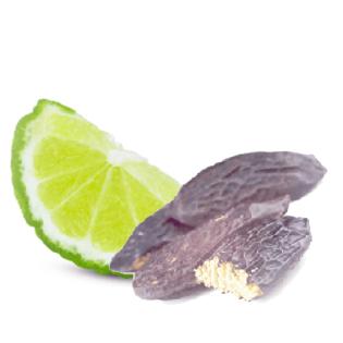 Home Fragrance Tonka Bean & Bergamot Sample