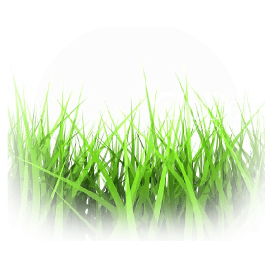 Home Fragrance Freshly cut grass Sample