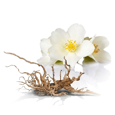 Home Fragrance Jasmine & Cedar Sample 13ml.
