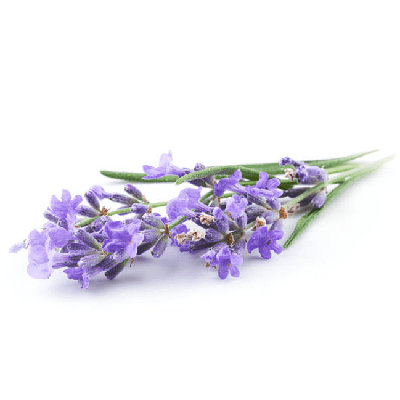 Home Fragrance French Lavander Sample
