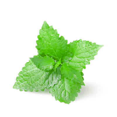 Home Fragrance Spicata Mint Sample 13ml.