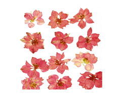 1902 Flor seca prensada larkspur rosa Innspiro