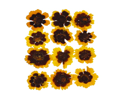 1904 Flor seca prensada golden wawe amarillo Innspiro