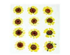 1909 Flor seca prensada mini chrysanthemum blanco Innspiro