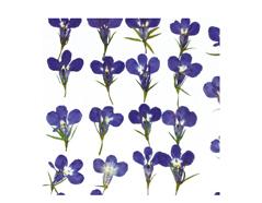 1921 Flor seca prensada loberia morado Innspiro