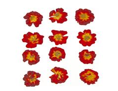 1925 Flor seca prensada rose rojo Innspiro