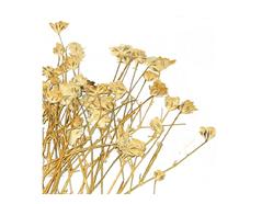 1949 Flor seca prensada gypsophlia blanco Innspiro