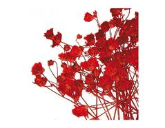 1951 Set de 10 flores secas gypsophlia rojo Innspiro