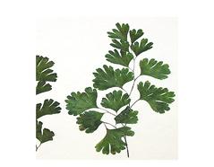 1957 Flor seca prensada maiden fern verde Innspiro