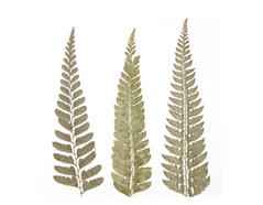 1967 Flor seca prensada sharp fern verde Innspiro