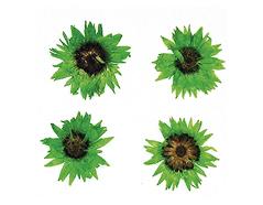 1977 Flor seca prensada baby everlasting verde Innspiro