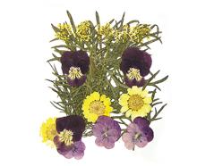 1989 Flores secas prensadas popurri Innspiro