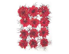 1993 Flor seca prensada nigella damascena rojo Innspiro