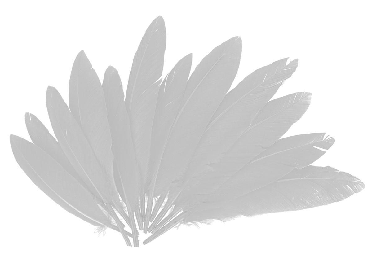 97331 Plumas indio blanco Innspiro