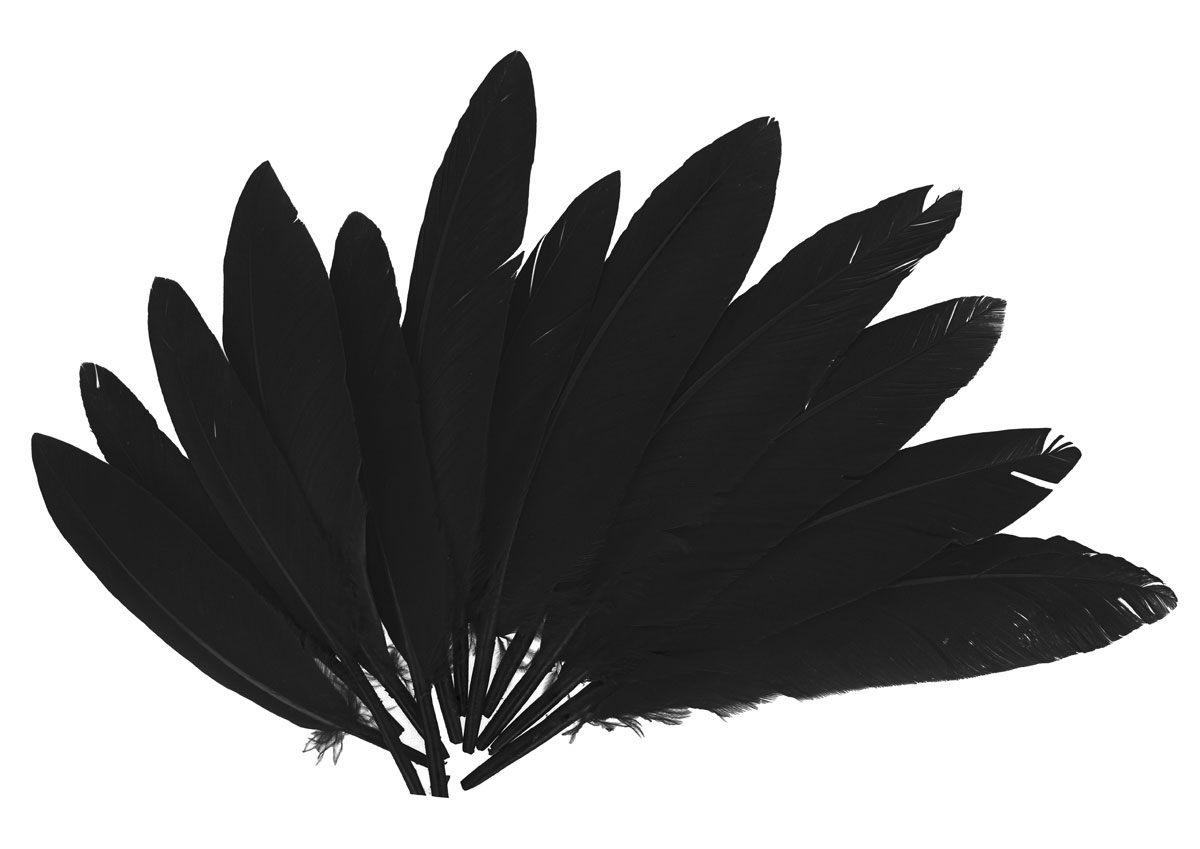 97332 Plumas indio negro Innspiro