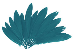 97333 Plumas indio azul Innspiro