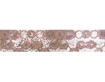 CL29131-02 Cinta adhesiva masking tape washi zwilinge marron Classiky s - Ítem2