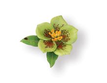 E658862 Set 9 troqueles THINLITS Flower Helleborus by Susan Tierney Cockburn Sizzix