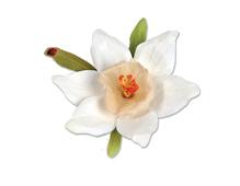 E658863 Set 12 troqueles THINLITS Flower Narcissus Paperwhites by Susan Tierney Cockburn Sizzix