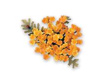 E658866 Set 6 troqueles THINLITS Flower Yarrow by Susan Tierney Cockburn Sizzix