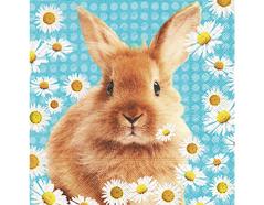 P200001 Servilletas papel Daisy rabbit Paper Design