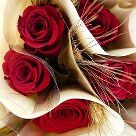 Enjoy Sant Jordi's Day