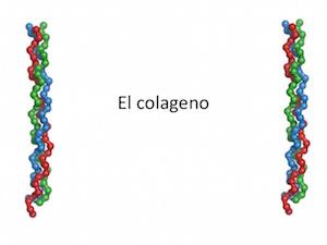 Colágeno hialuronico, articulaciones y huesos.